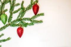 Zielone jodeł gałąź z czerwoną sosną konusują na białym tle Obrazy Stock
