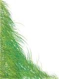 zielone lata sylwetki trawy Zdjęcie Stock