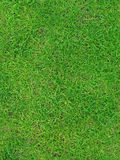 zielone lata trawy konsystencja Obraz Stock