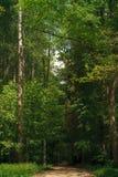 zielone leśną lato Obrazy Royalty Free