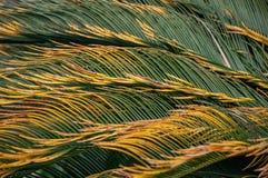 zielone liście palma zdjęcia stock