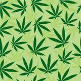 zielone liści tła zioło Obrazy Stock