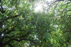 zielone liści tło obrazy royalty free