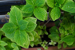 zielone liści tło Zdjęcie Stock