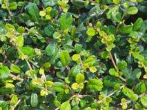 zielone liści tło zdjęcia stock