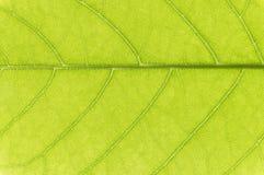 zielone liści tło Obrazy Stock