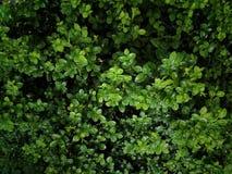 zielone liści tło Obraz Royalty Free