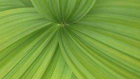 zielone liście Zdjęcia Stock
