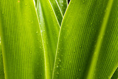 zielone liście Zdjęcia Royalty Free