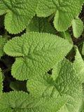zielone liście roślin Zdjęcie Stock