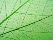 zielone liście szczegół Obrazy Stock