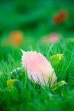 zielone liście trawy jesienią Fotografia Royalty Free