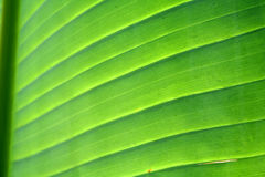 zielone liści, Obrazy Royalty Free
