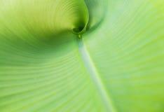zielone liści, Zdjęcie Royalty Free