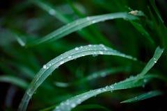 zielone liści kropli wody Obraz Royalty Free