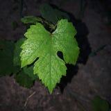 zielone liści kropli wody obrazy royalty free