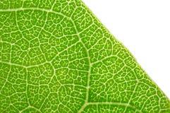 zielone liści makro Obraz Royalty Free