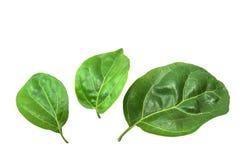 zielone liści makro Obraz Stock