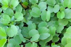 zielone liści schematu Zdjęcie Royalty Free