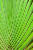 zielone liści szczególne Obrazy Royalty Free