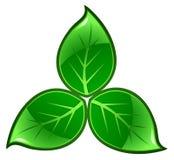 zielone liście royalty ilustracja