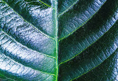 zielone liście Fotografia Stock