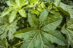 zielone liście Zdjęcie Stock