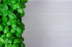 zielone liście basil Makro- Zdjęcia Stock