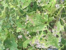 zielone liście brown Fotografia Royalty Free
