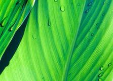 zielone liście iii Fotografia Royalty Free