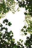 zielone liście ramowi Obrazy Royalty Free
