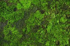 Zielone mech zieleni, tła mech tekstury i i zdjęcie stock