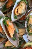 Zielone mussel skorupy obrazy royalty free