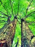 zielone niebo Obrazy Stock