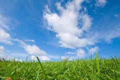 zielone niebo błękitne trawy Fotografia Royalty Free