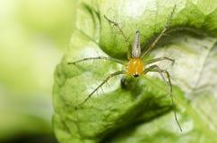 zielone nogi tęsk natura pająk Zdjęcia Royalty Free