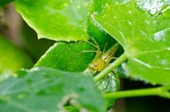 zielone nogi tęsk natura pająk Zdjęcia Stock