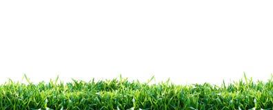 zielone odosobnione trawy tło białe Naturalny tło zdjęcie royalty free