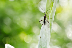 zielone ojczulek nogi tęsk natura Zdjęcia Royalty Free