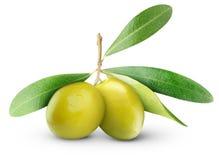 zielone oliwki Zdjęcia Royalty Free