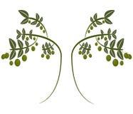 Zielone oliwki ilustrować royalty ilustracja