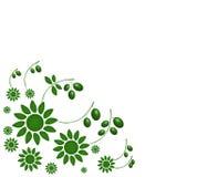 Zielone oliwki ilustrować Zdjęcie Stock