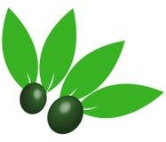 Zielone oliwki ilustrować Obrazy Royalty Free