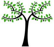 Zielone oliwki ilustrować Obraz Stock