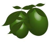 Zielone oliwki ilustrować Fotografia Royalty Free