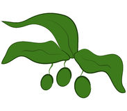 Zielone oliwki ilustrować Fotografia Stock