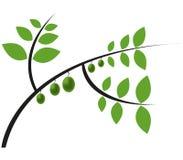 Zielone oliwki ilustrować Zdjęcie Royalty Free