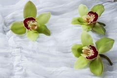 Zielone orchidee biały tło - odosobnione - Obrazy Royalty Free