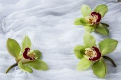 Zielone orchidee biały tło - odosobnione - Zdjęcie Royalty Free
