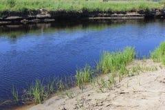 Zielone płochy blisko do jeziora 31043 Fotografia Stock